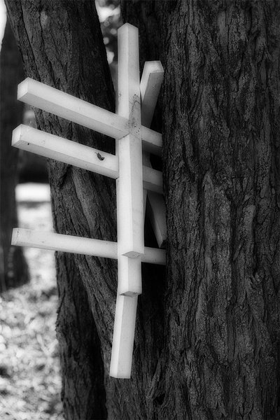 Three Crosses in a Tree