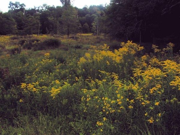 Grasas Fields